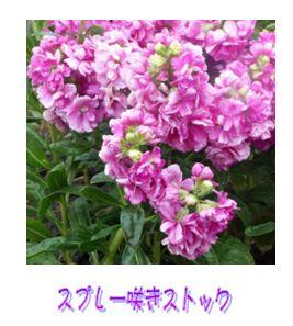 c0111581_20522514.jpg
