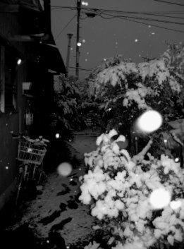 ▼冬の夜の降りもの_d0017381_8402280.jpg