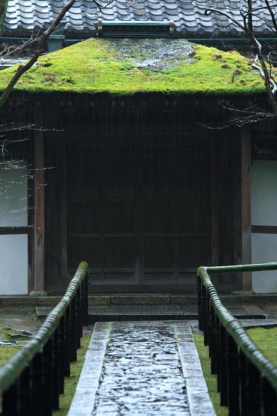 高桐院(大徳寺塔頭)_e0051888_22552477.jpg