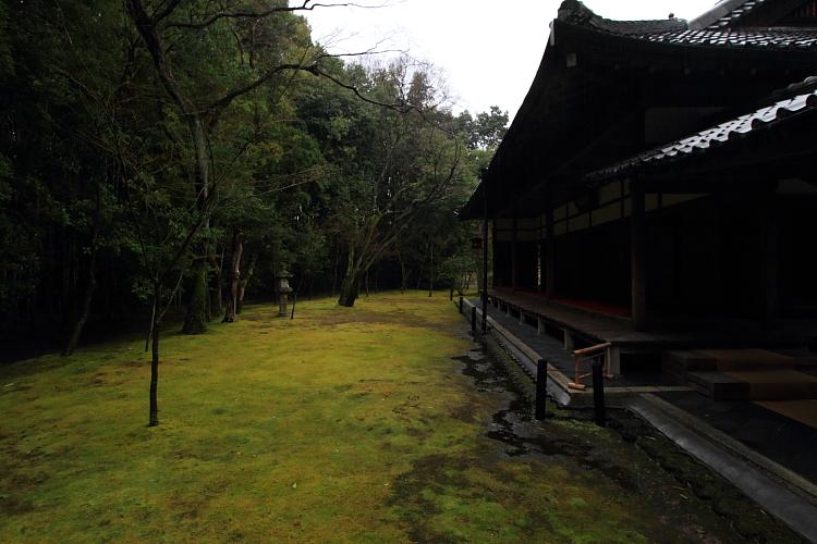 高桐院(大徳寺塔頭)_e0051888_22574480.jpg