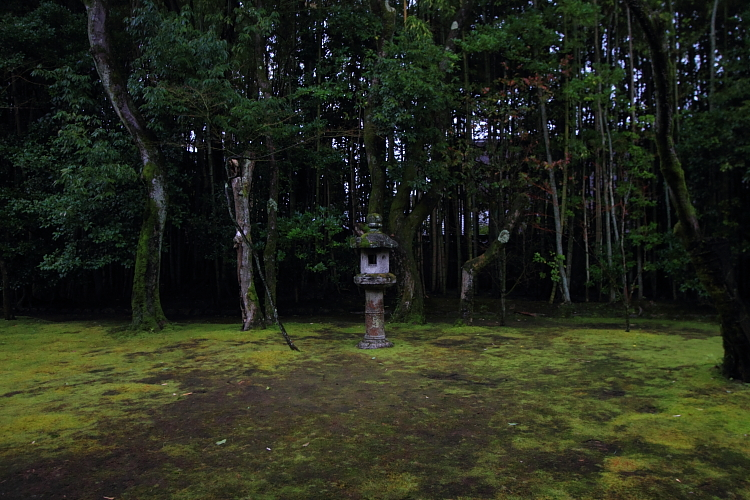 高桐院(大徳寺塔頭)_e0051888_22584160.jpg
