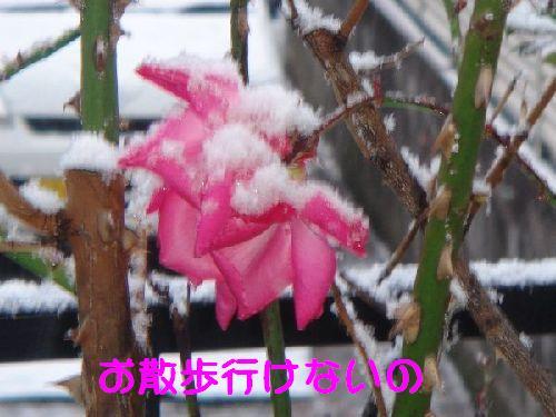 b0101991_21532029.jpg