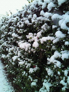 雪~♪_d0091994_23171743.jpg