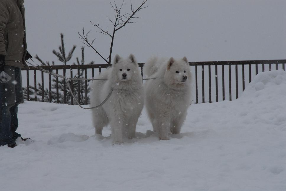 雪国ツアー♪ part1_a0049296_21334116.jpg