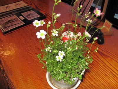 写真教室で花を撮ってみよう_e0120896_7155613.jpg