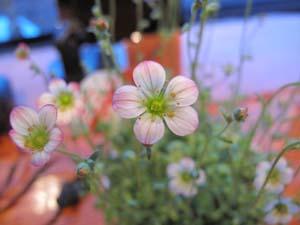 写真教室で花を撮ってみよう_e0120896_7175794.jpg