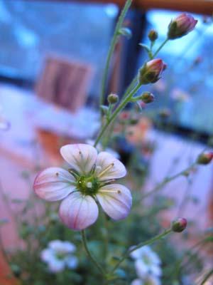 写真教室で花を撮ってみよう_e0120896_7181656.jpg