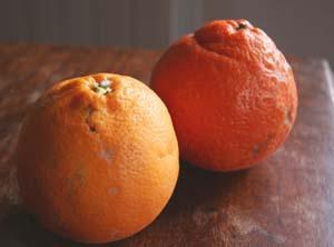 美味しい有機シチリアオレンジ_f0106597_21535684.jpg