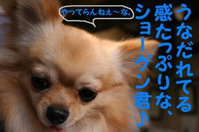 b0130018_15541277.jpg