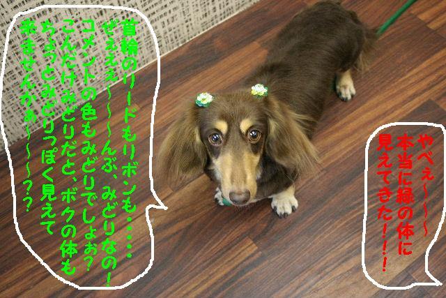 これはマジックか?&色んな写真&イヌリンピックに・・・&緑のもの・・・_b0130018_15574585.jpg