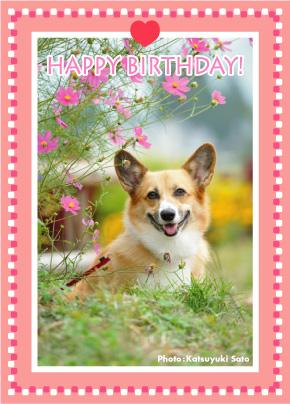 くるみちゃん、お誕生日おめでとう♪_d0102523_1155566.jpg