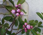 桃ももうすぐ_f0101128_8294639.jpg