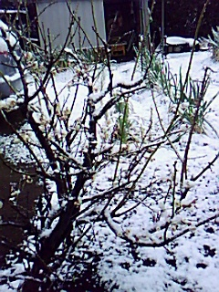 珍しい~雪の湘南...._b0137932_2027999.jpg