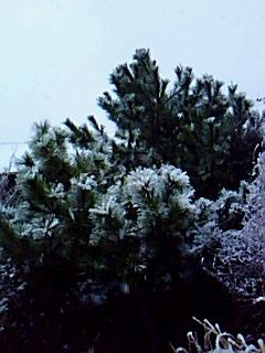 珍しい~雪の湘南...._b0137932_20375967.jpg