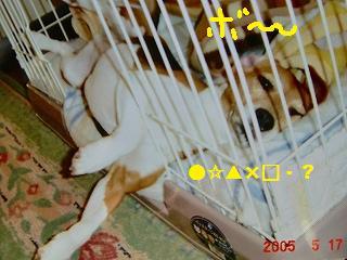 a0169935_17201114.jpg