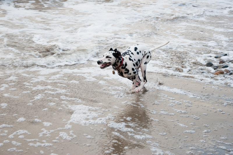 アスリート犬_f0137354_20472997.jpg