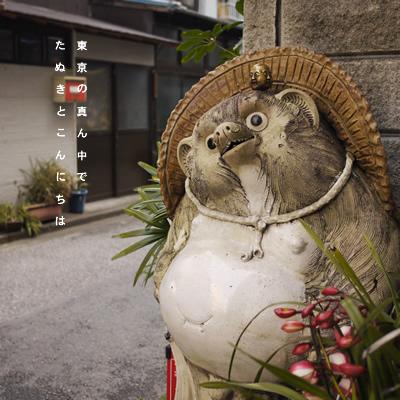 たぬきさん_a0153361_23333578.jpg
