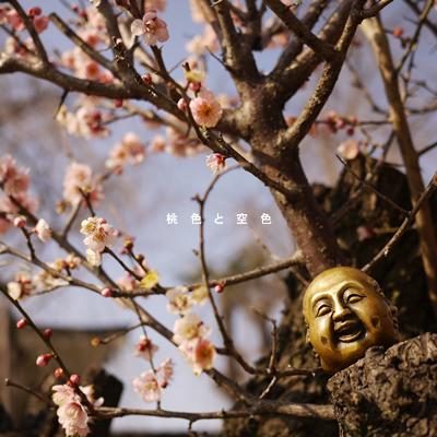 梅の花_a0153361_23554212.jpg
