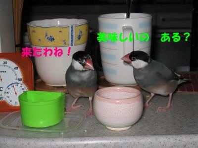 b0158061_1937235.jpg