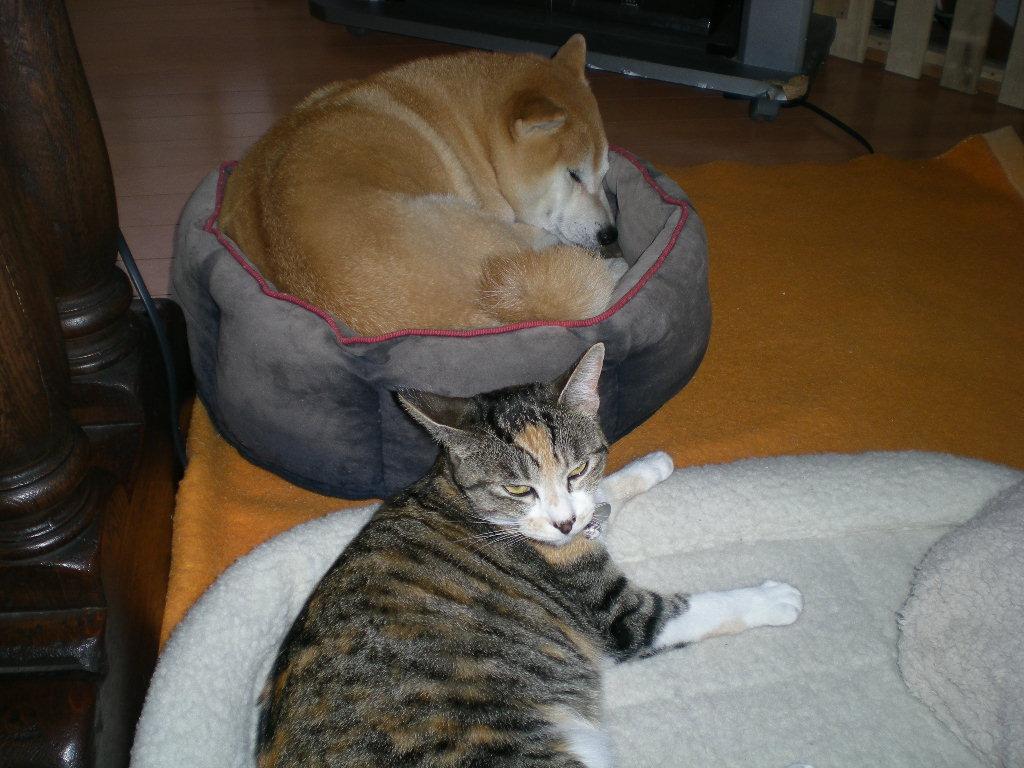 2010年2月19日(金)正しいベッド!_f0060461_11151156.jpg