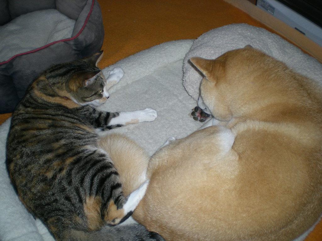 2010年2月19日(金)正しいベッド!_f0060461_11165022.jpg