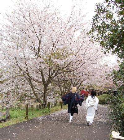桜、素敵。_a0157480_21211723.jpg