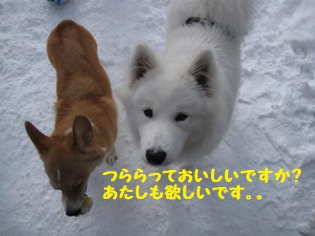 f0212597_420182.jpg