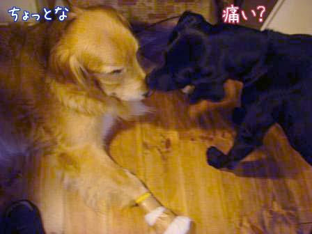 五郎が5歳になりました。_f0064906_1801316.jpg
