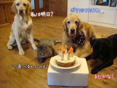 五郎が5歳になりました。_f0064906_1813226.jpg