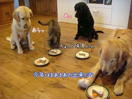 五郎が5歳になりました。_f0064906_18145810.jpg