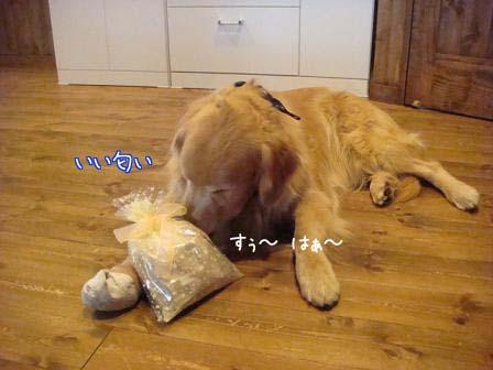 五郎が5歳になりました。_f0064906_18185156.jpg
