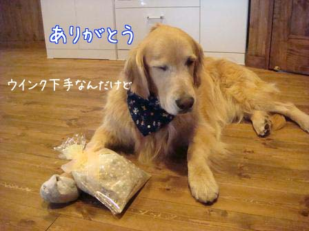五郎が5歳になりました。_f0064906_1819378.jpg