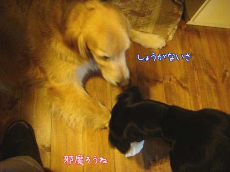 五郎が5歳になりました。_f0064906_1842615.jpg