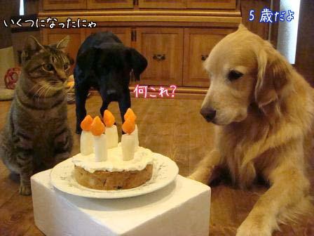 五郎が5歳になりました。_f0064906_1893394.jpg