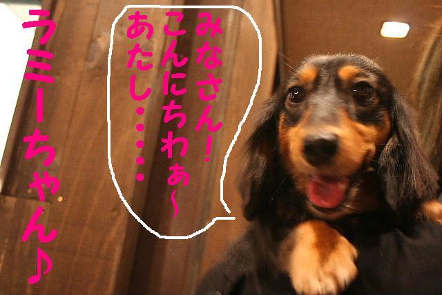 嬉し過ぎて!&トリマー泣かせ!&おねえ系??_b0130018_1842297.jpg