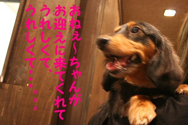 嬉し過ぎて!&トリマー泣かせ!&おねえ系??_b0130018_18425446.jpg