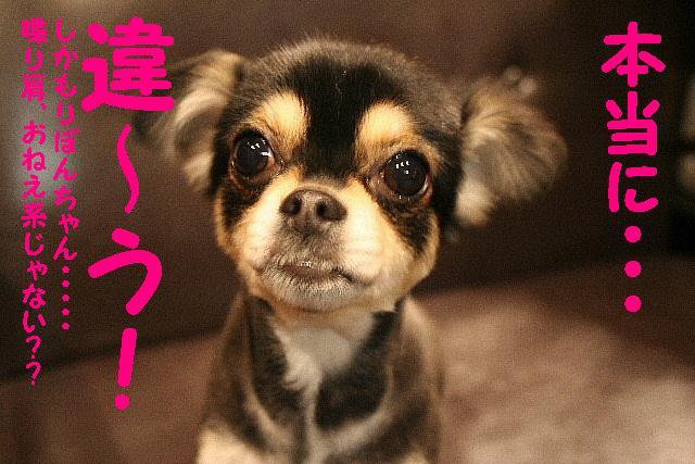 嬉し過ぎて!&トリマー泣かせ!&おねえ系??_b0130018_18465985.jpg