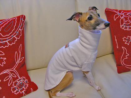 *初めての犬服作り*_d0094131_20201225.jpg