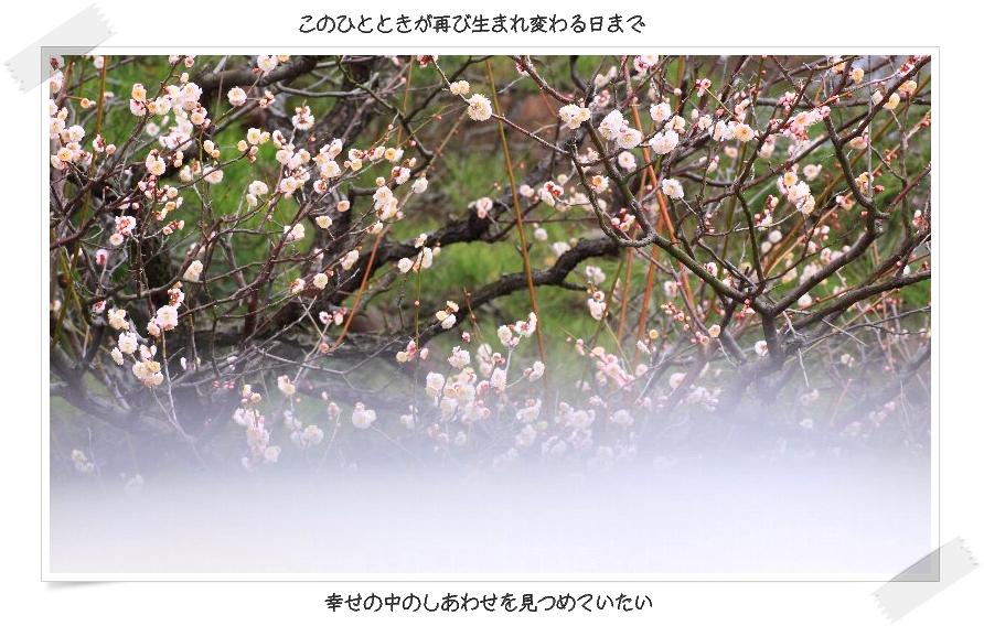 b0180042_23314271.jpg
