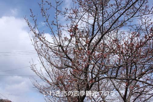 f0105342_12304142.jpg