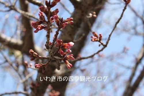 f0105342_12305230.jpg