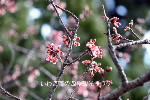 f0105342_1231130.jpg