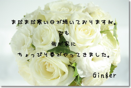 b0066947_22245031.jpg
