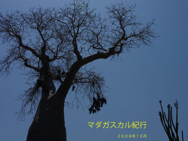 b0144049_1229058.jpg