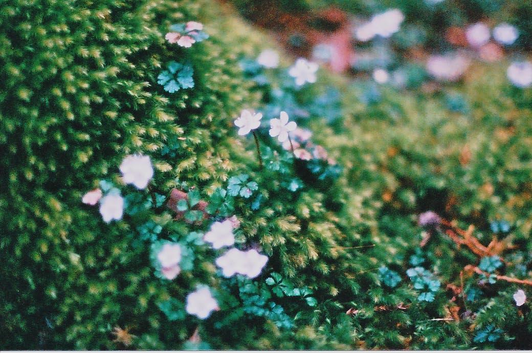 森の精_e0156251_23404058.jpg