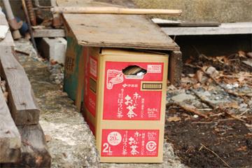 昭和の庭で_c0181457_3513436.jpg