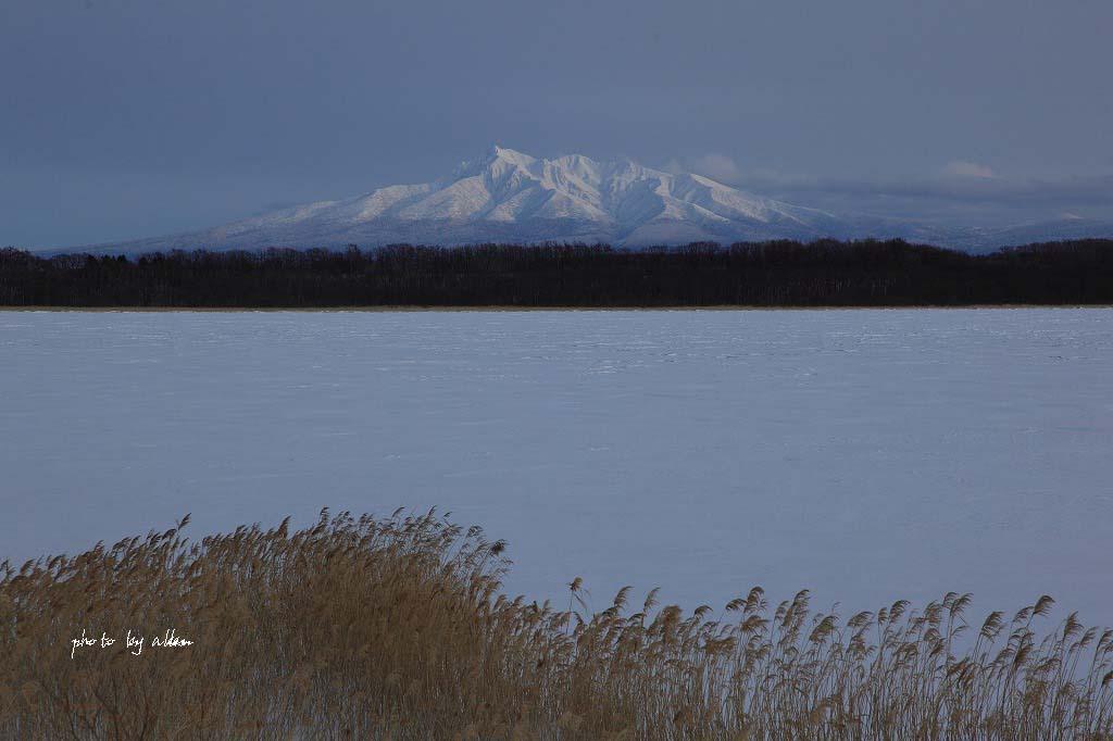 雪の降る中の流氷ノロッコ号より~_a0039860_18241585.jpg