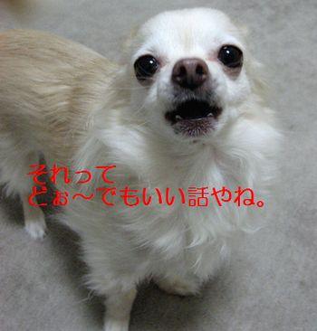 b0133861_0323977.jpg