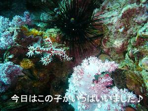 やっぱり海はいいですね ~祝☆アドバンス!~_f0144385_20485629.jpg