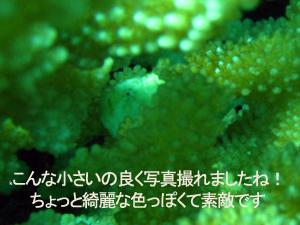 2月19日 ラチャノイ・ラチャヤイ3dive_f0144385_2245167.jpg